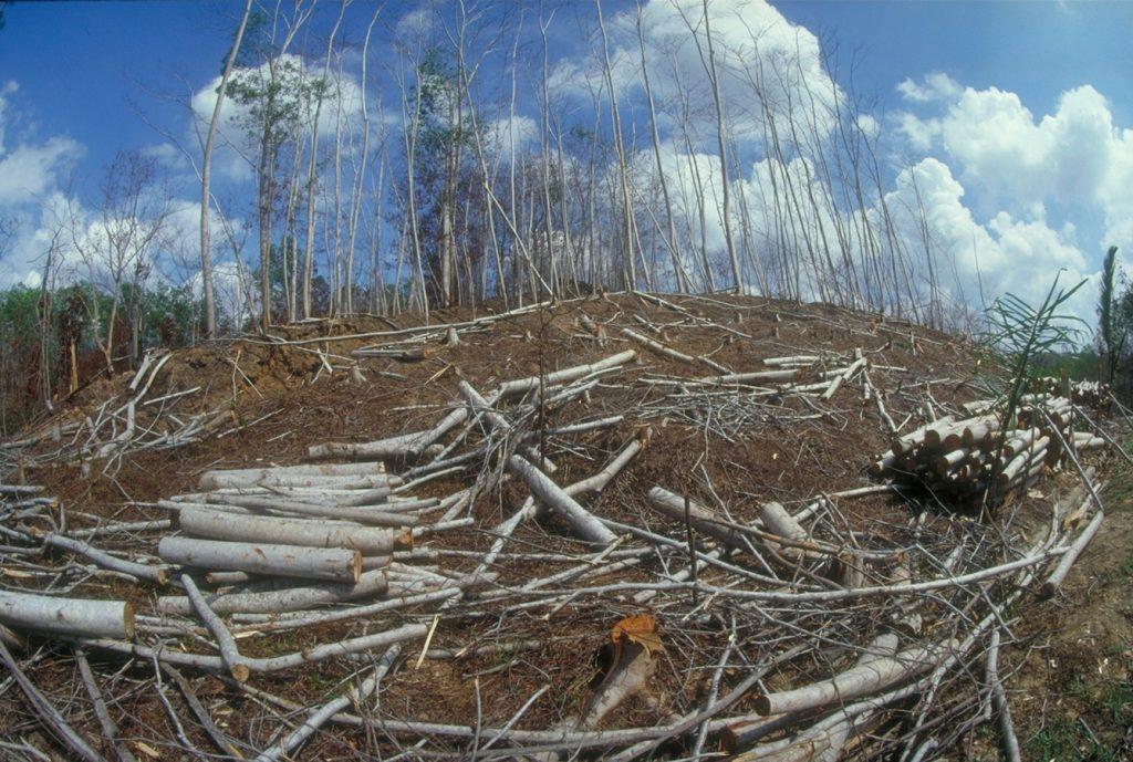 abgeholzter Wald
